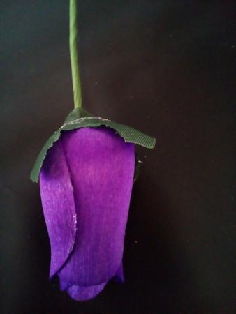 Violet roos