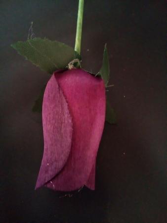 Burgundy roos