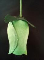 Light Green roos